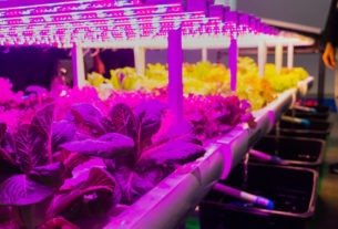 Led Grow Light Shop Reviews